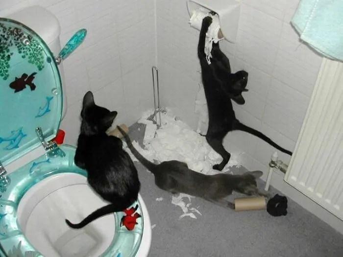 Image result for mischievous cat