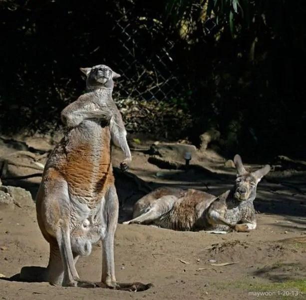 Funny Animals 100 46 Pics