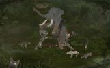 Screenshot_Elephant_Wolf
