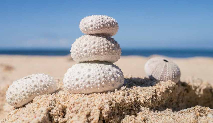 coquillage sable oursins photographie