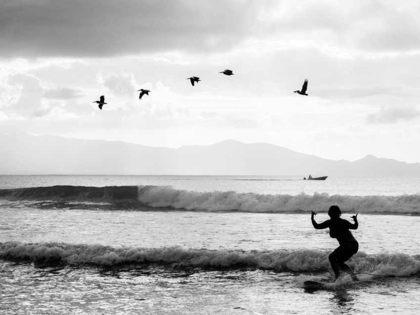 surf oiseau rencontre improbable guadeloupe