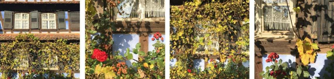 automne, alsace, feuilles