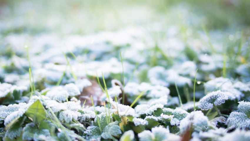 neige, givre, hiver, alsace