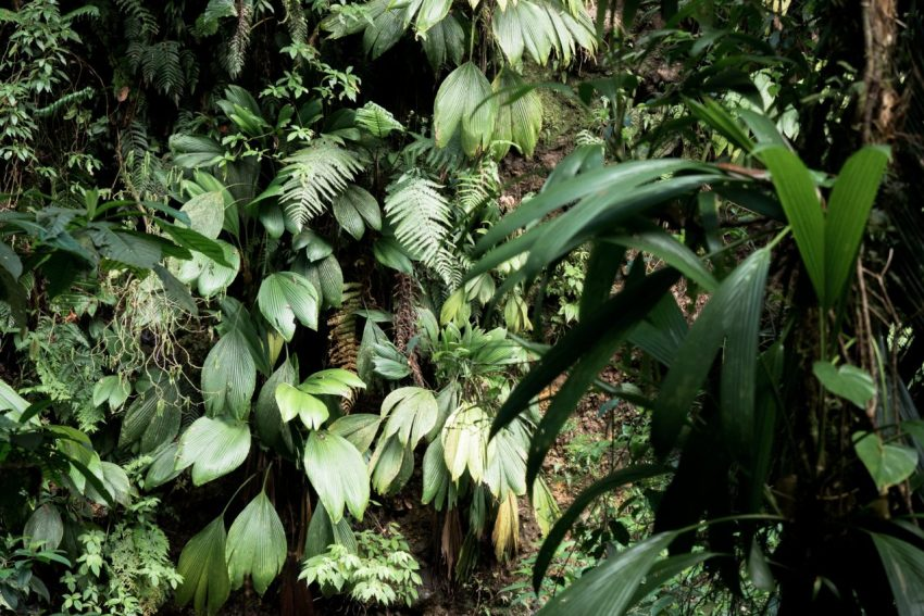 guadeloupe, nature, foret tropicale, cascade