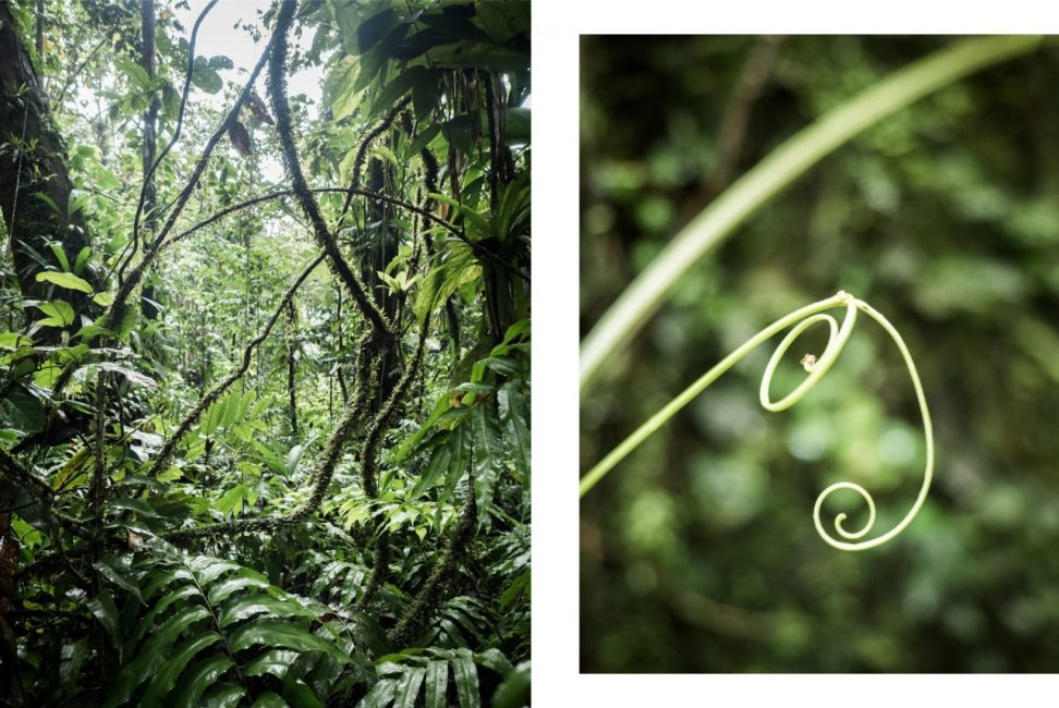 forêt tropicale, guadeloupe, basse terre, nature, tropical forest