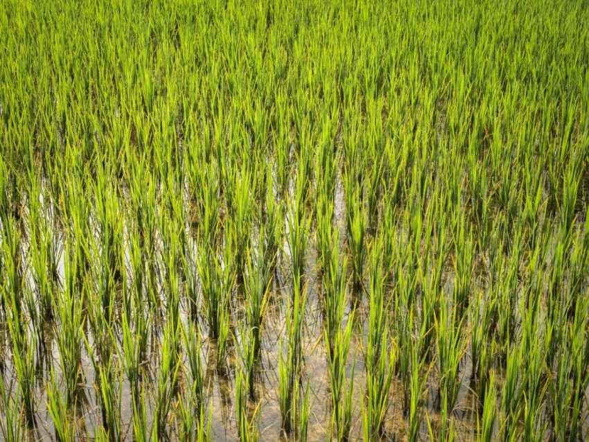 vietnam, ethnies minoritaire, rizières, vallée de mai chau, culture