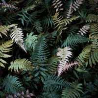 un joyau émeraude se niche dans la forêt tropicale, la cascade Paradis