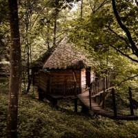 Une cabane dans les Arbres en Alsace