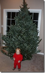 Frasier Fir Christmas Tree