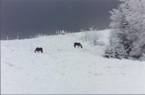Horses-on-snowy-hill.jpg