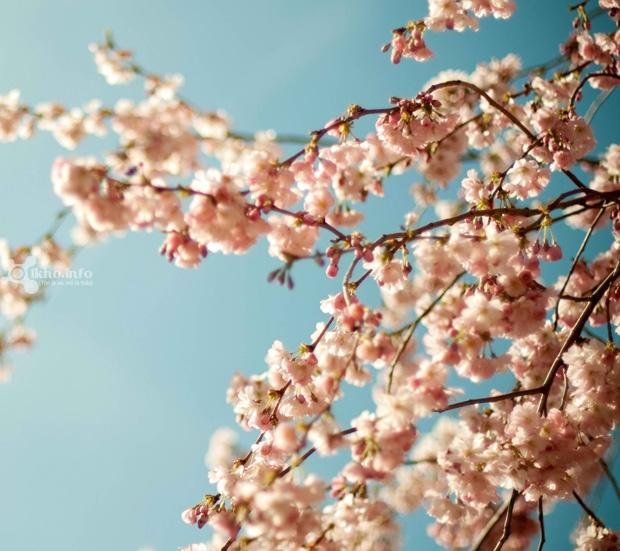33.Blossoms