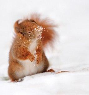Nghịch tuyết nhé!