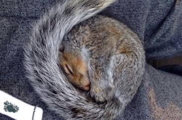 Trời lạnh mà quấn đuôi ngủ đúng ấm luôn.