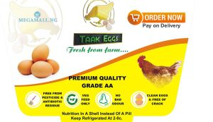 wholesale eggs for sale