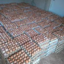 Fresh Eggs in nigeria at the best price