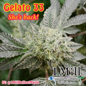 Gelator 33 at 1 Mill Belfast