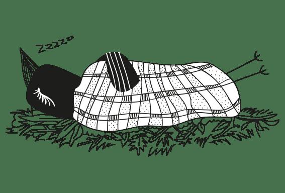 N_oiseau-grassemat - 1 Noiseau à Paris - Graphiste illustratrice Webdesigner Val de Marne