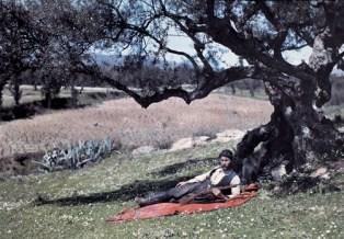 Ένας κυνηγός ξαπλώνει κάτω από ένα ελαιόδεντρο στην Κρήτη.