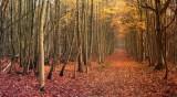 Chemin dans la Forêt de Carnelle