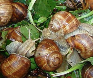 1 Picture 1 Word Snail Mix