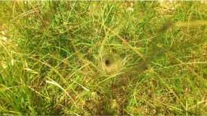 Natural Hole