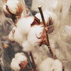 Cotton Wool