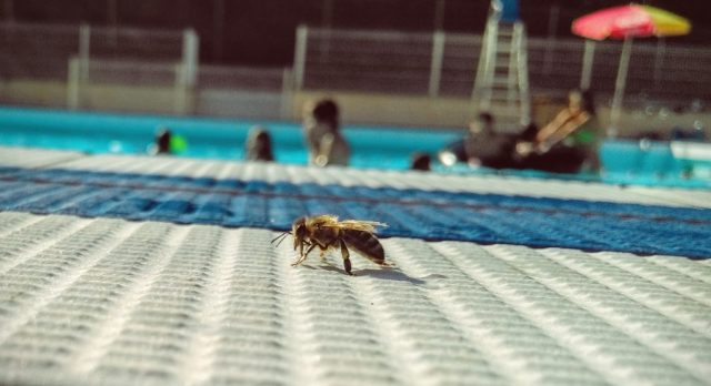 1-picture-1-word-bee-holidays