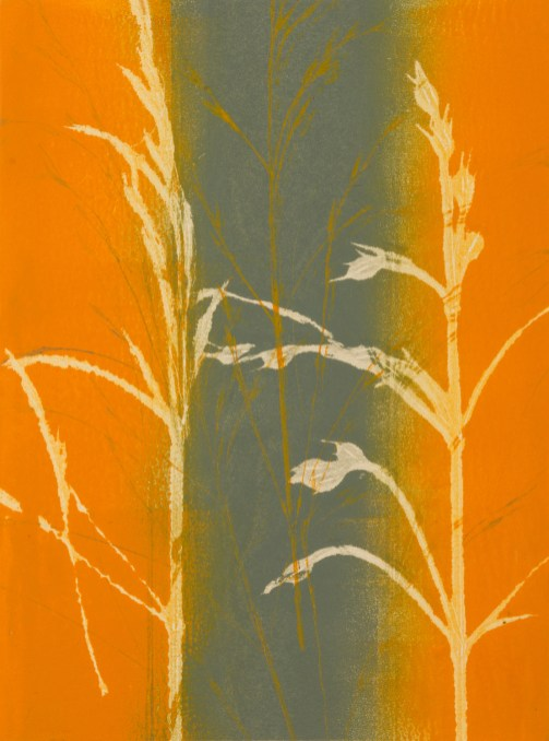 Tina Albro - Soft winter wheat