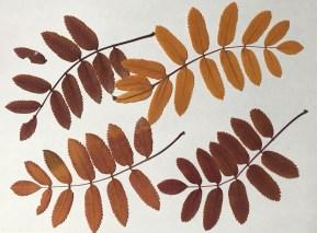 BotanicalsForPrinting19