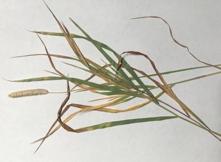 BotanicalsForPrinting2