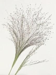 BotanicalsForPrinting4