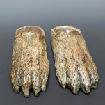 Bear Feet by Trudy Skari