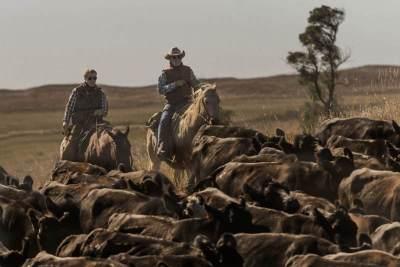 cattledrive2_4700x3100