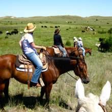 Horse Ranch Vacation