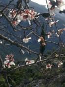 CYPRESS TREE 7