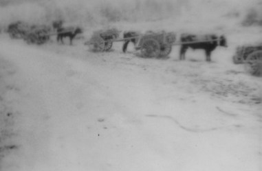"""""""The sight of a platoon advancing with this primitive baggage train was reminiscent of many an old-time battle painting--minus the camp followers. Improvise whips and cattle calls soon appeared...."""" - Lt. Stott"""