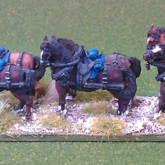 limber horse team