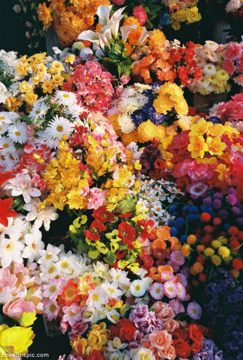 Each of us is a Flower. How to grow a RAINBOW in the classroom. Tips & Tricks.