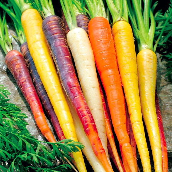 Carrot juice: the secret to agelessness, healthy vision
