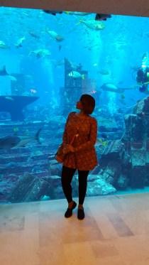 Aquarium at Atlantis, The Palm.