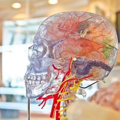 jesse-orrico-brain