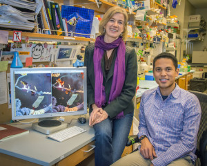 "Jennifer Doudna and James Nuñez led a study that revealed how bacteria ""steal"" genetic information from foreign invaders for use in their own immunological memory system. (Photo by Roy Kaltschmidt)"