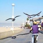 Birdman of Hermosa Beach, Ca.