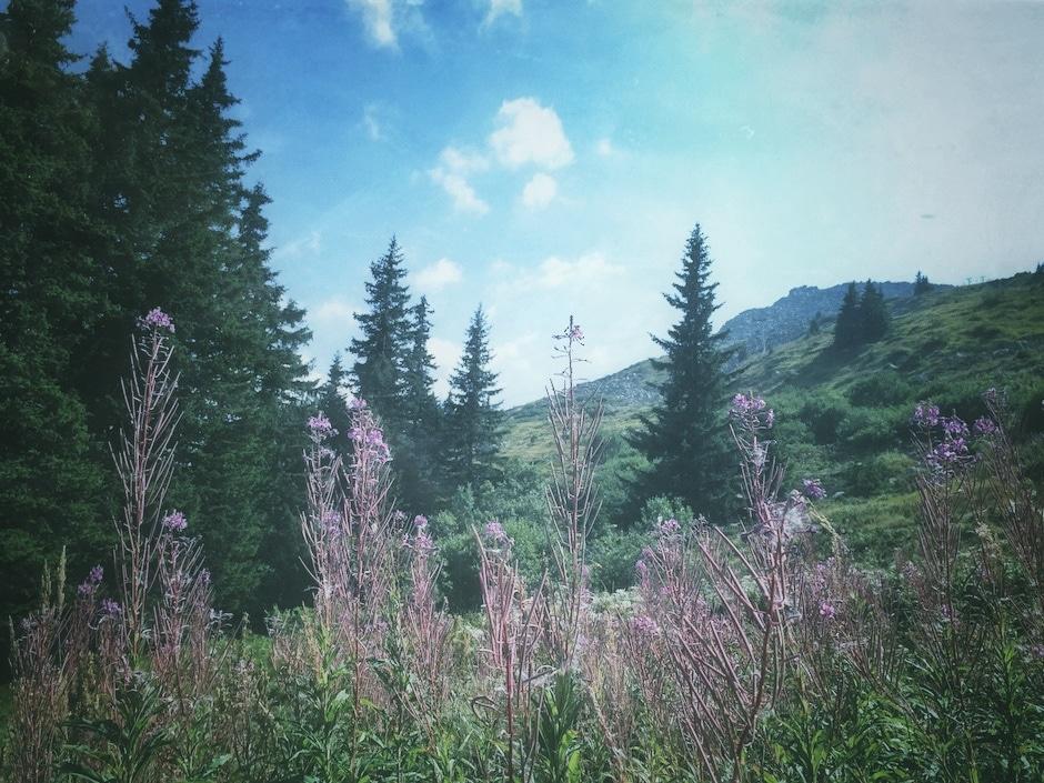 Witoscha Gebirge Sofia