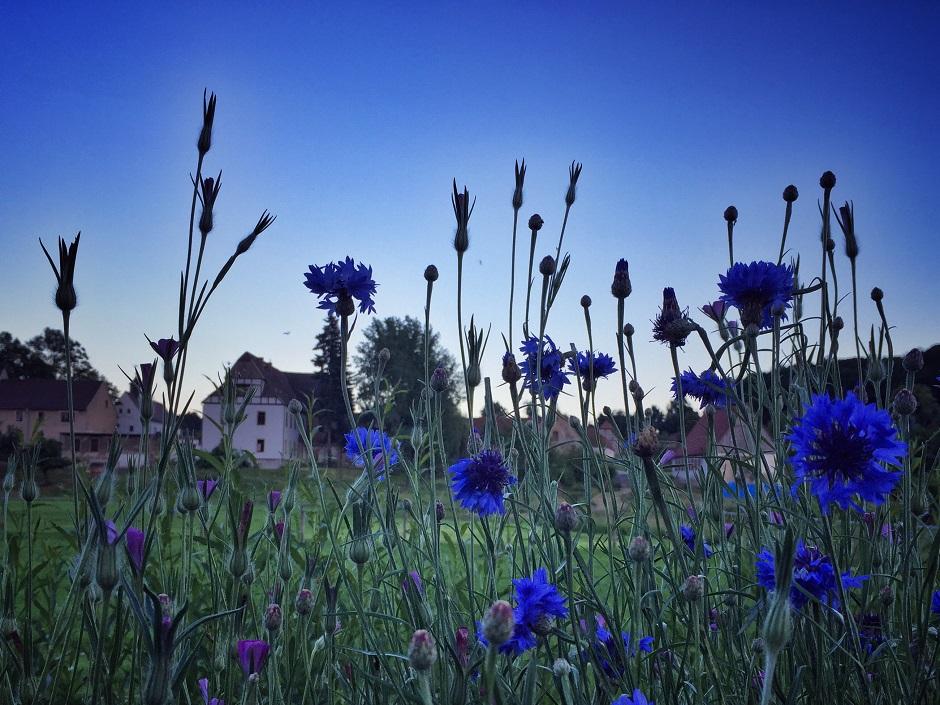 kloster-altzella_kraeutergarten_abend_1-thing-to-do