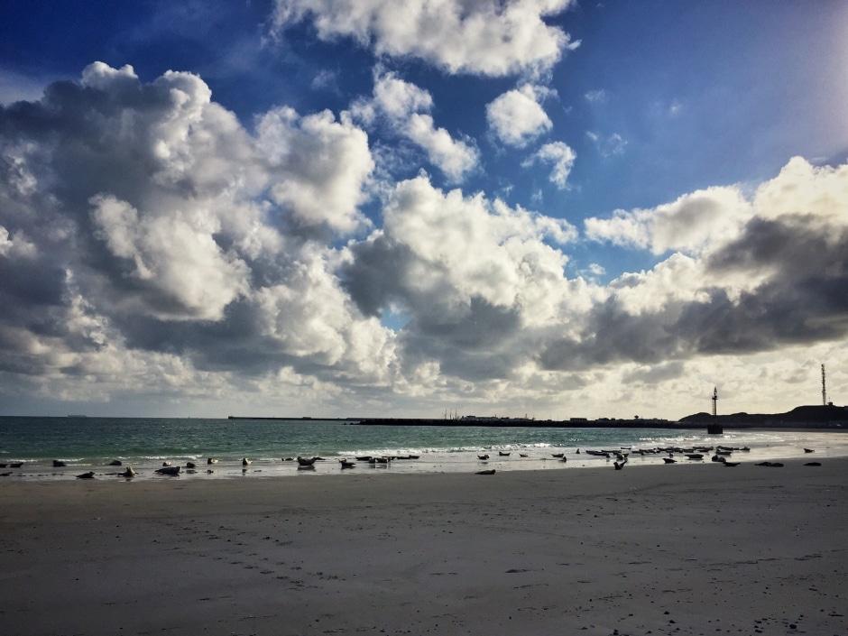 Helgoland Kegelrobben
