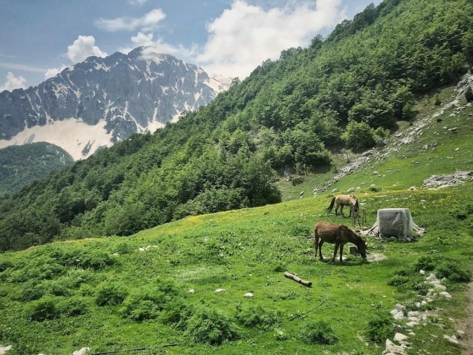 Wandern Albanien Maja Rosit