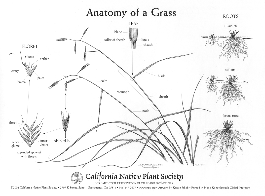 7 California Native Grasses For Your Landscape Project
