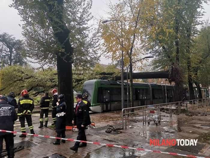 Albero caduto su tram. Foto di Mattia Corcella 4