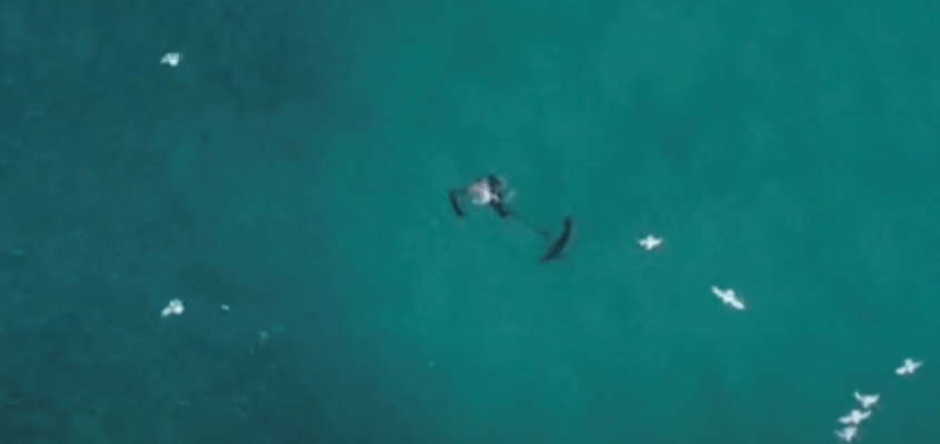 Video: Drone operator helps rescue fisherman he saw being attacked by a shark